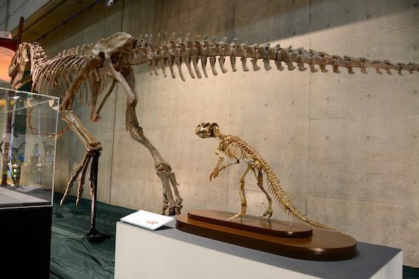 小さくてかわいい「プシッタコサウルスの一種」