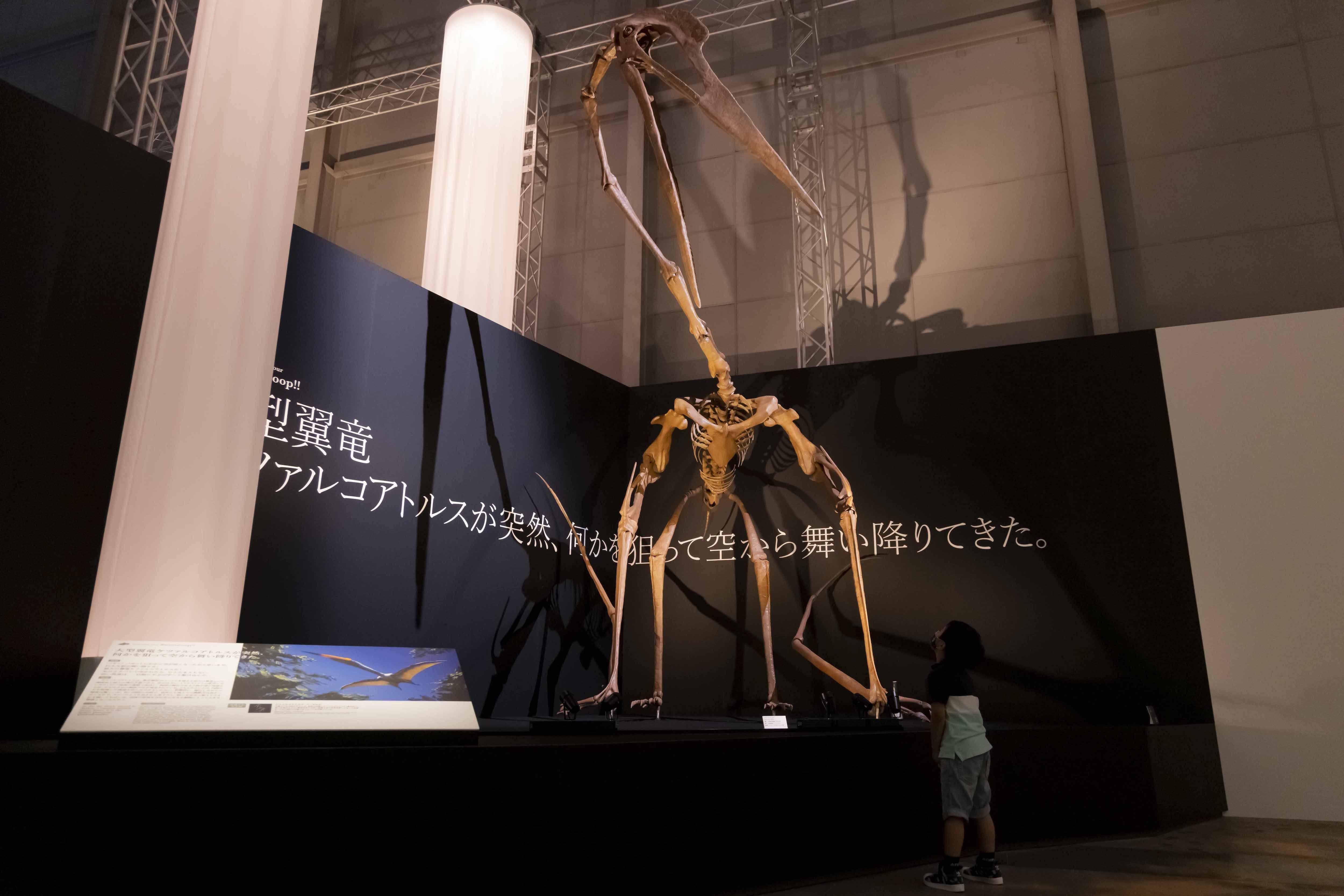 ケツァルコアトルスは、空を飛ぶ生物としては史上最大と言われる