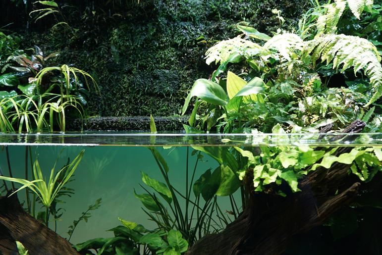 水中と陸上の交わる水辺を再現