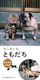仲良しの「ねこといぬ」を集めた写真展が2018年1月より開催 動物写真家・岩合光昭が世界中で見つけた「ともだち」