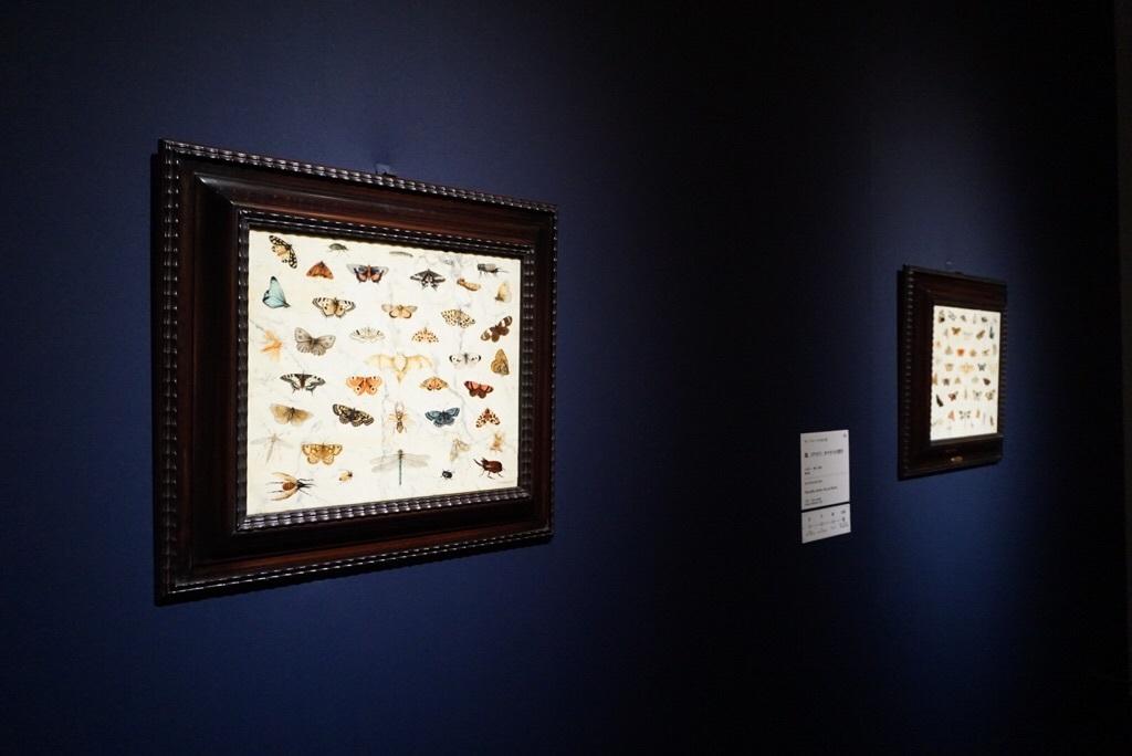 《蝶、カブトムシ、コウモリの習作》ヤン・ファン・ケッセル1世  1659年