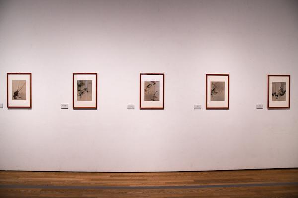 《花鳥魚鰕画冊》展示風景 メトロポリタン美術館(アメリカ)蔵