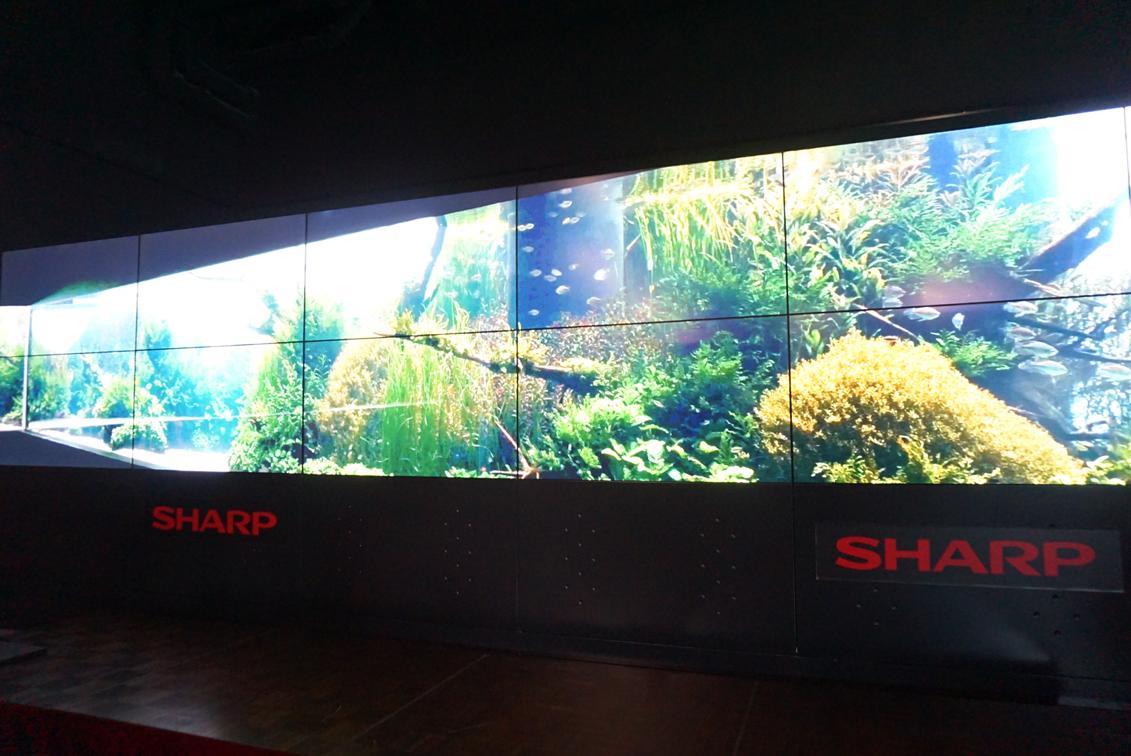リスボン海洋水族館「水中の森」映像作品