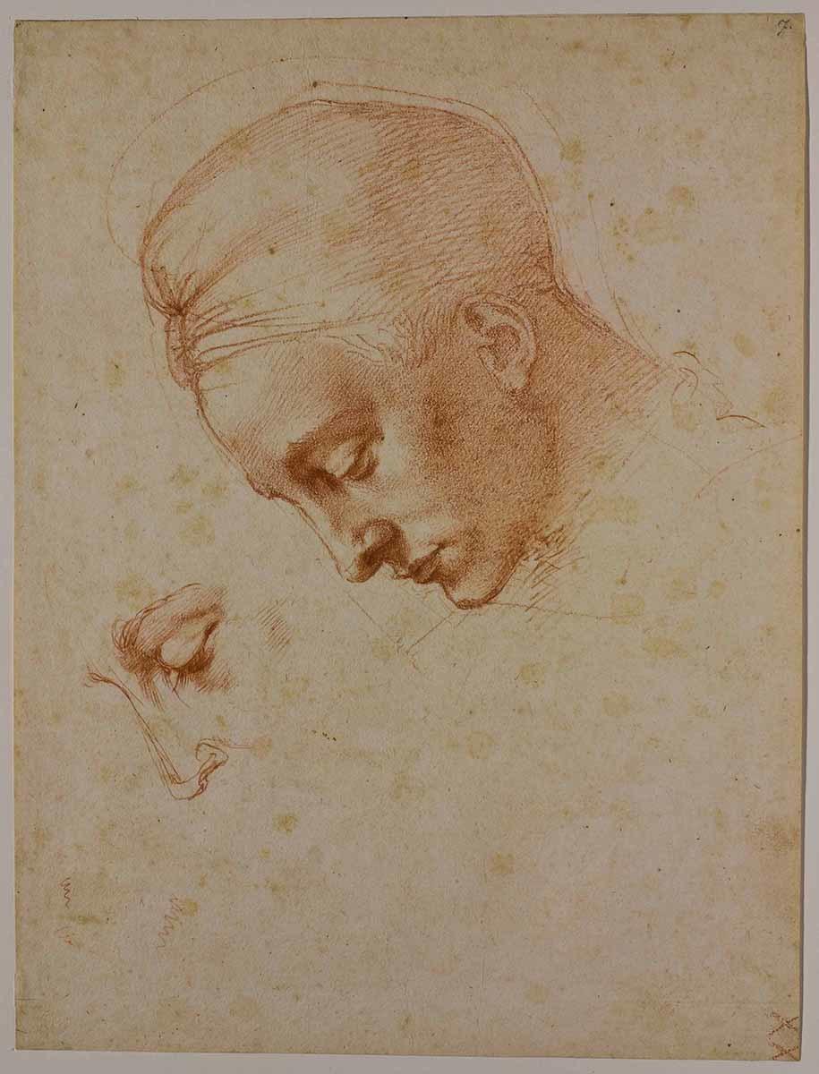ミケランジェロ・ブオナローティ 《<レダと白鳥>の頭部のための習作》 1530年頃 カーサ・ブオナローティ ©Associazione Culturale Metamorfosi and Fondazione Casa Buonarroti