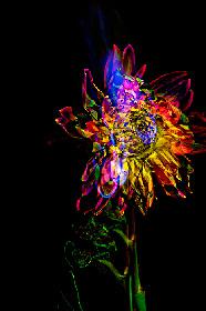 押し花、映像、写真で植物の世界を表現 相壁琢人の展覧会『無彩色の痛点』