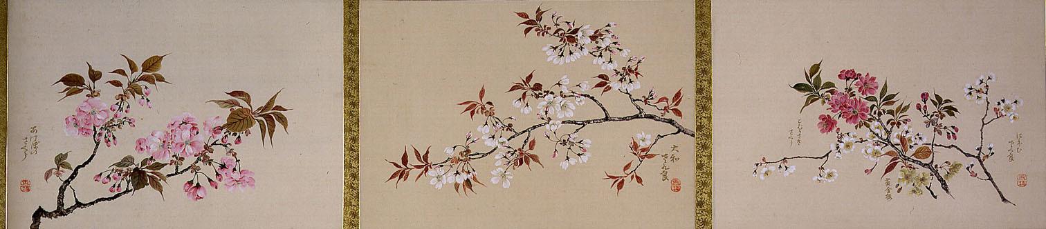 跡見玉枝《桜花図巻》(部分)1934年