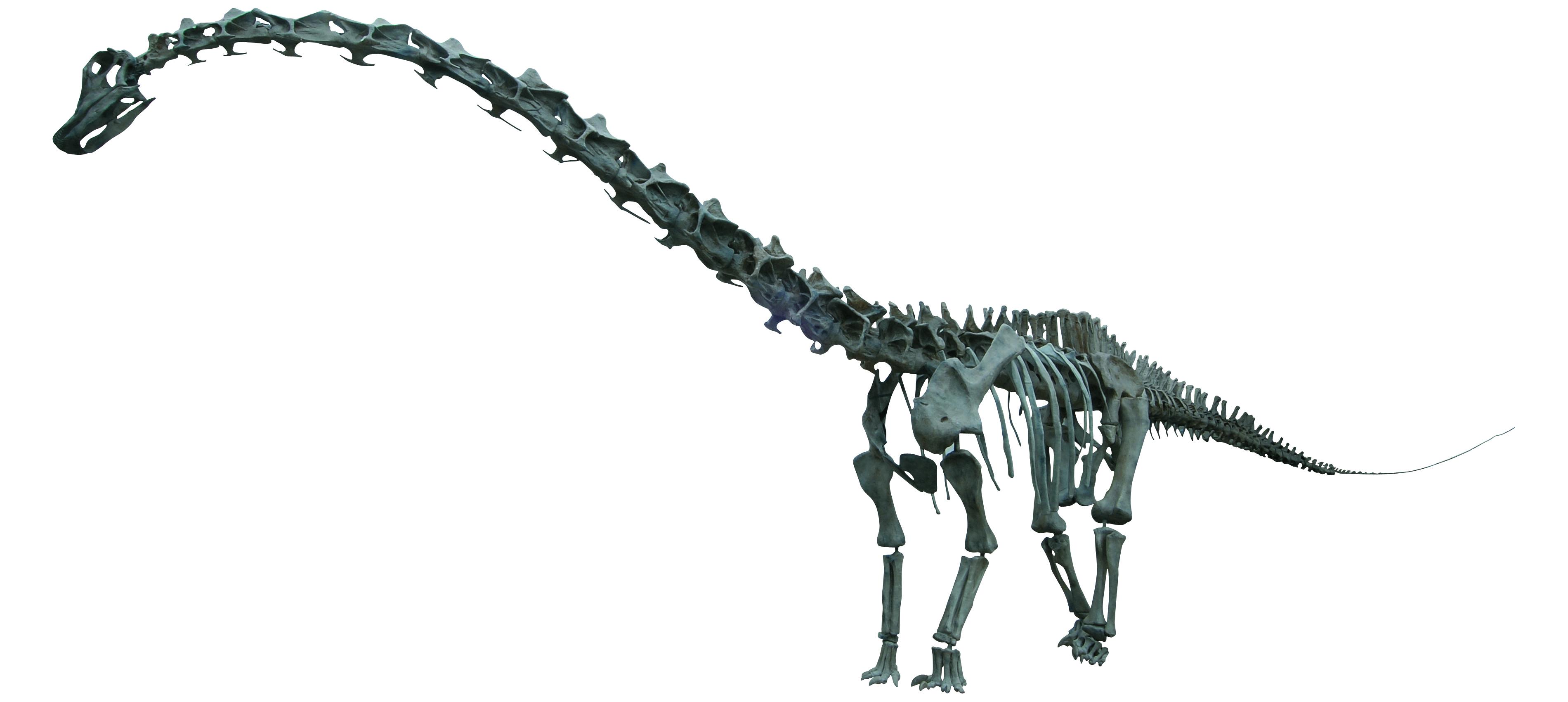 ディプロドクス 全身復元骨格