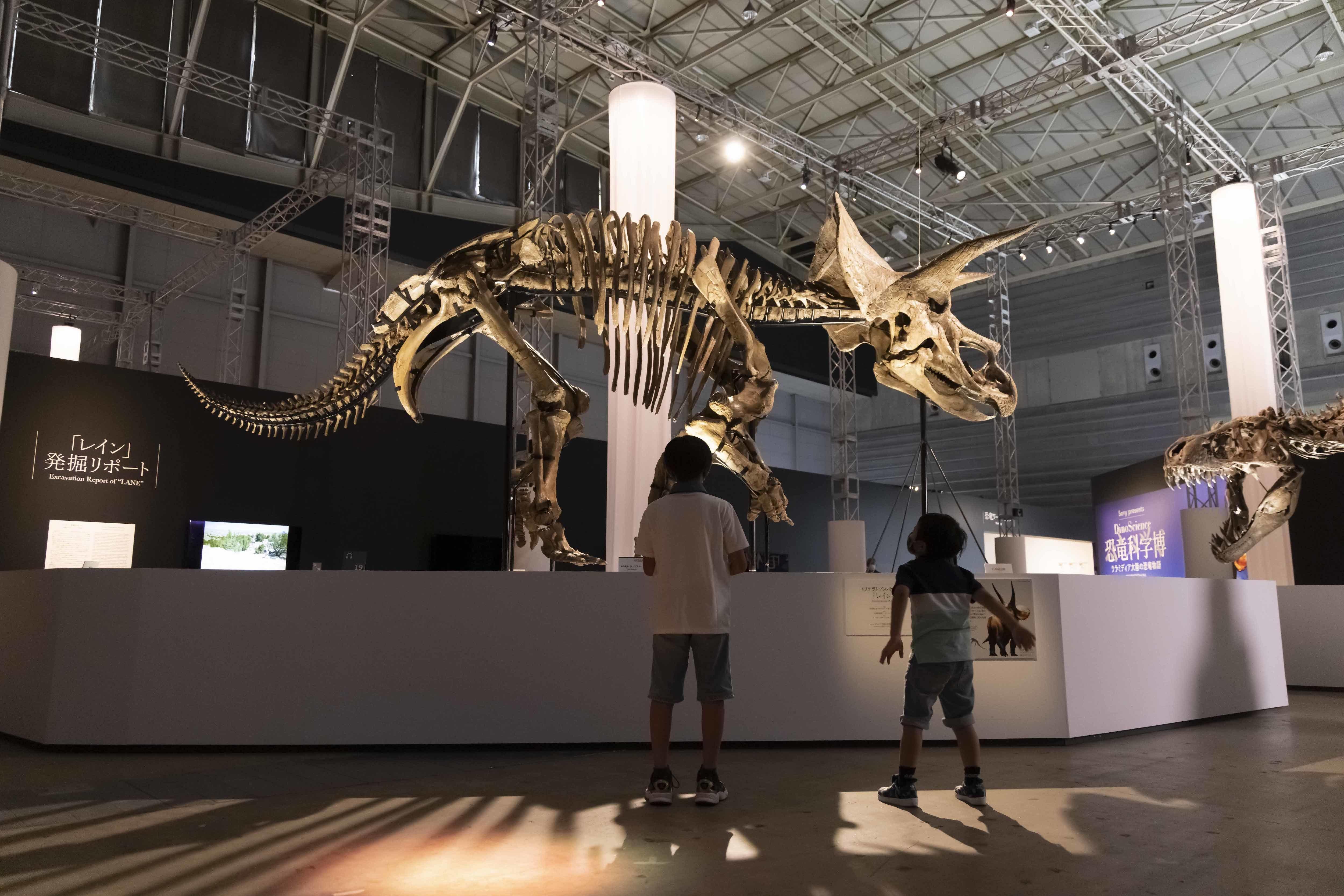 全長7m×高さ3mのトリケラトプス「レイン」 ※ヒューストン自然科学博物館所蔵