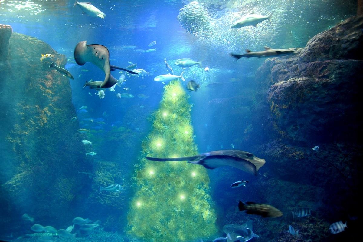 光の宿る木(新江ノ島水族館)