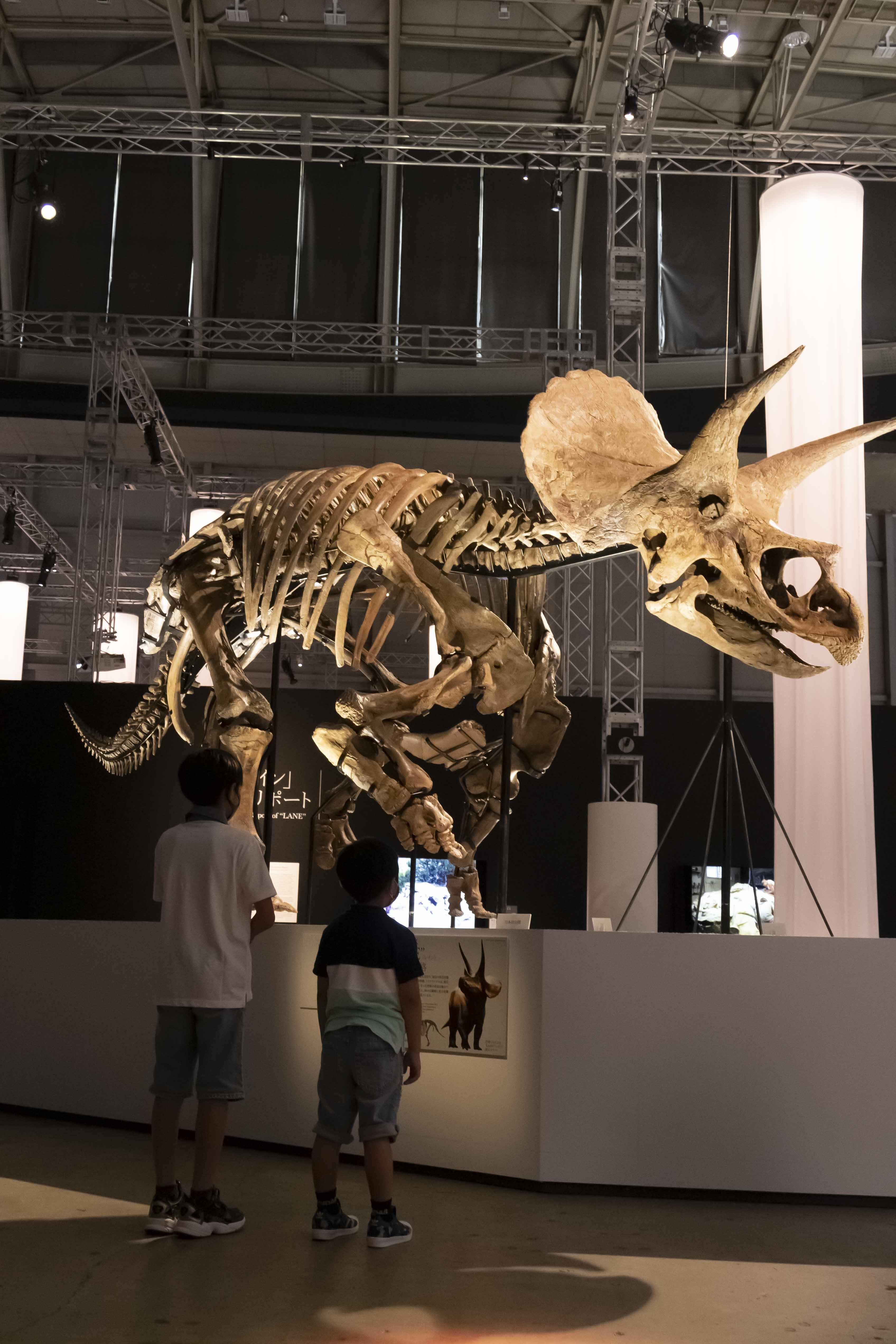 「レイン」と恒陽くん・恒瑛くんの歳の差はおよそ6590万歳だ (C)DinoScience 恐竜科学博製作委員会