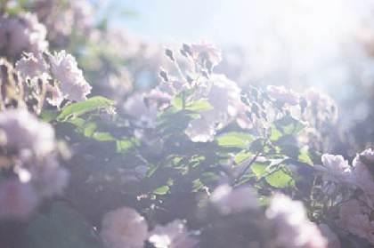 『蜷川実花 うつくしい日々』展が開催に 父・幸雄の死に向き合う日々を撮影した作品約60点を展示