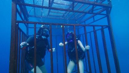 """サメだけじゃない!あなたに海の恐ろしさをたたき込む『海底47m』#野水映画""""俺たちスーパーウォッチメン""""第三十二回"""