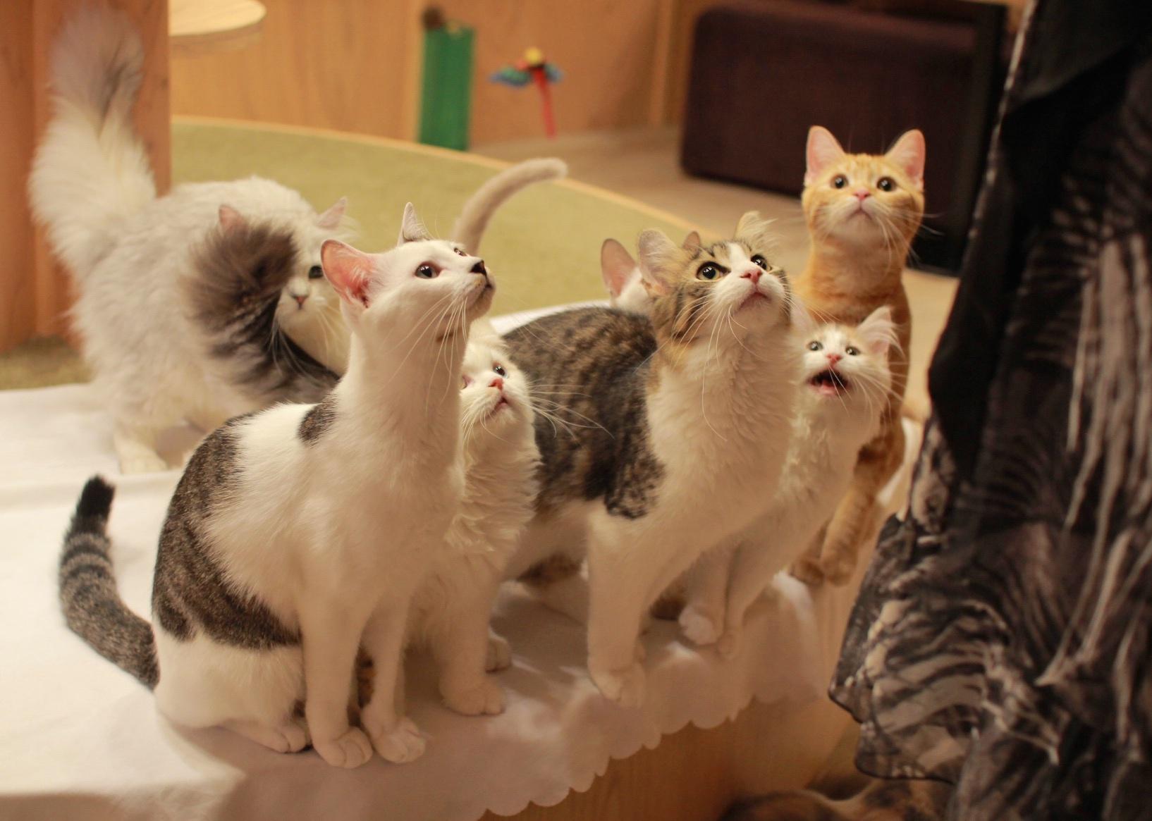 猫カフェMoCHA・原宿竹下通り店