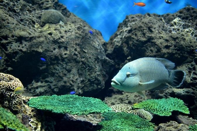 「沖縄の海」水槽