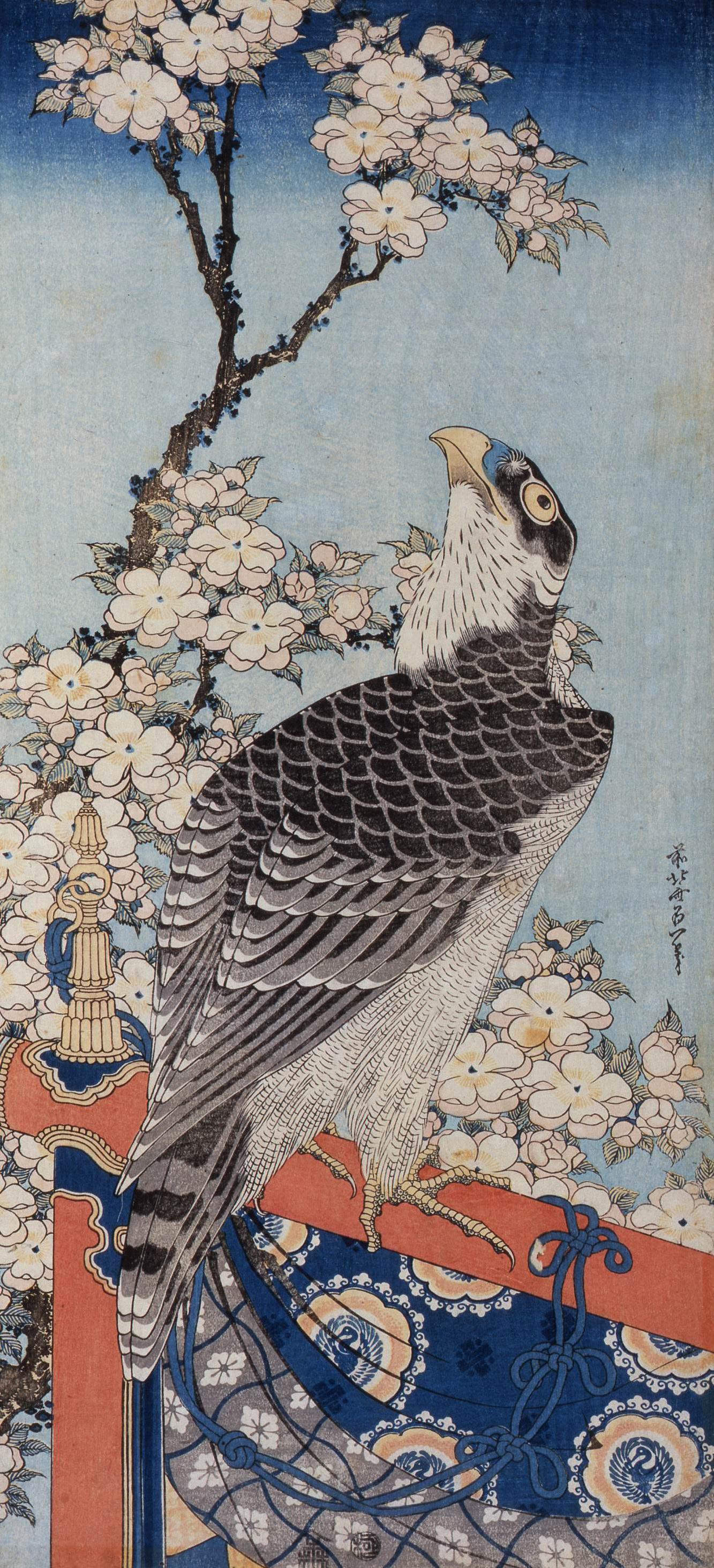 葛飾北斎「桜に鷹」すみだ北斎美術館蔵(前期)