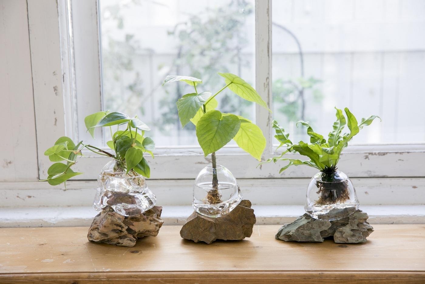 アクア盆栽 各14,580円(税込)~ 土を使わず、 水で育てる「アクア盆栽」。 お手入れは週に1回の水替えだけです。 従来、 土で隠れて見えなかった力強く躍動感のある「根」を鑑賞することができます。