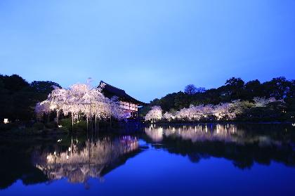 『平安神宮 紅しだれコンサート』が4月に開催! 東儀秀樹 、宮本笑里、藤原道山、DEPAPEPEが出演