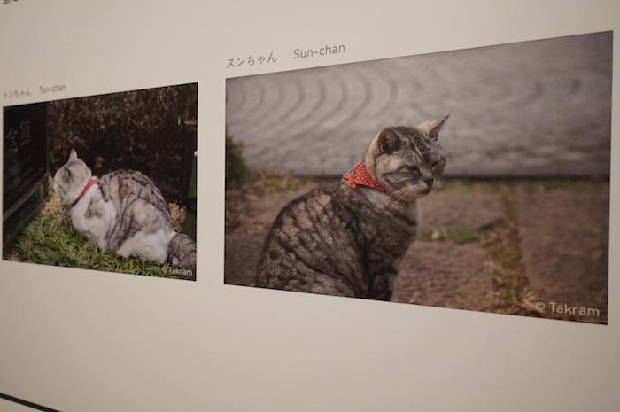 リサーチに協力したネコの「トンちゃん」と「スンちゃん」近影