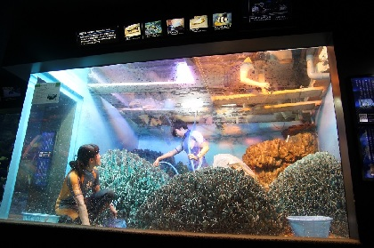 水族館の水槽の水を全部抜く サンシャイン水族館の水槽から生物と水が消える日