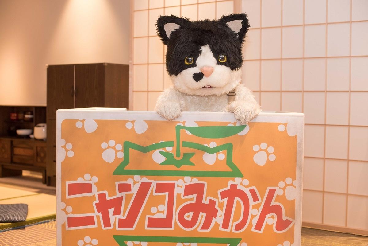むぎ(猫) 撮影=小野正博