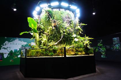 幻想的な水景に驚嘆 自然の神秘が詰まった『NATURE AQUARIUM EXHIBITION 2021 TOKYO』レポート