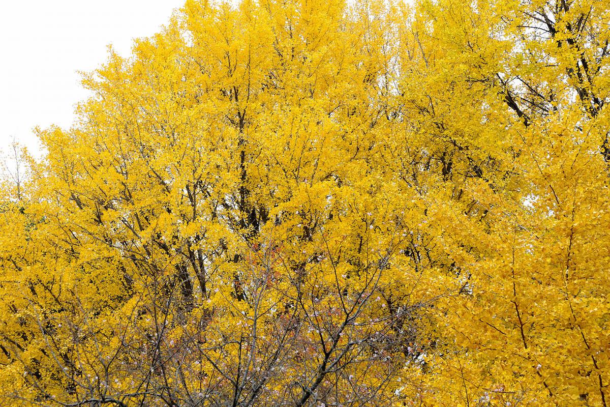 四季折々の景観も楽しい上野公園。ロケ時はギリギリ紅葉に間に合いました