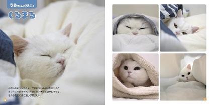 """寝る、パトロール、毛づくろい……猫の""""おしごと""""を紹介する写真集『ねこのおしごと』が発売"""