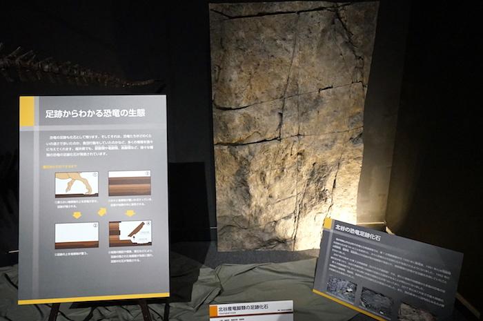 北谷産竜脚類の足跡化石 福井県立恐竜博物館所蔵