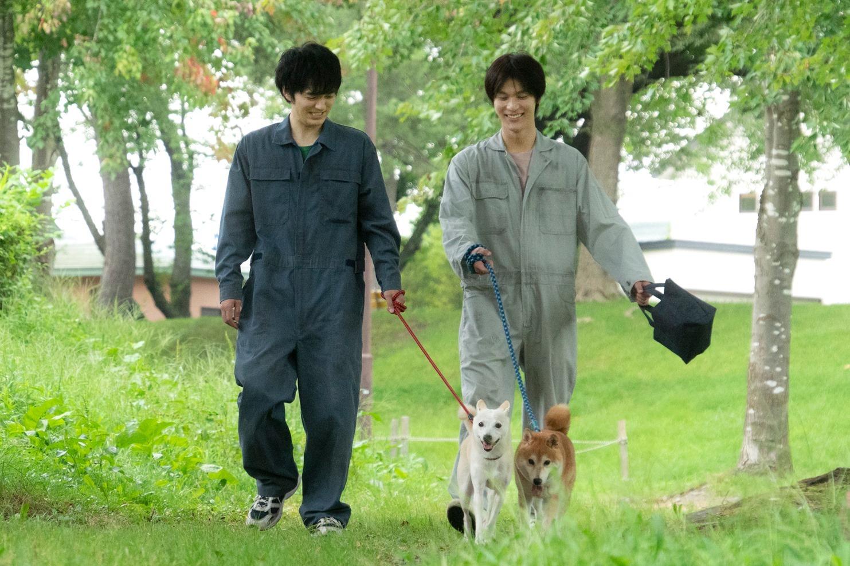 映画『犬部!』 (C)2021『犬部!』製作委員会