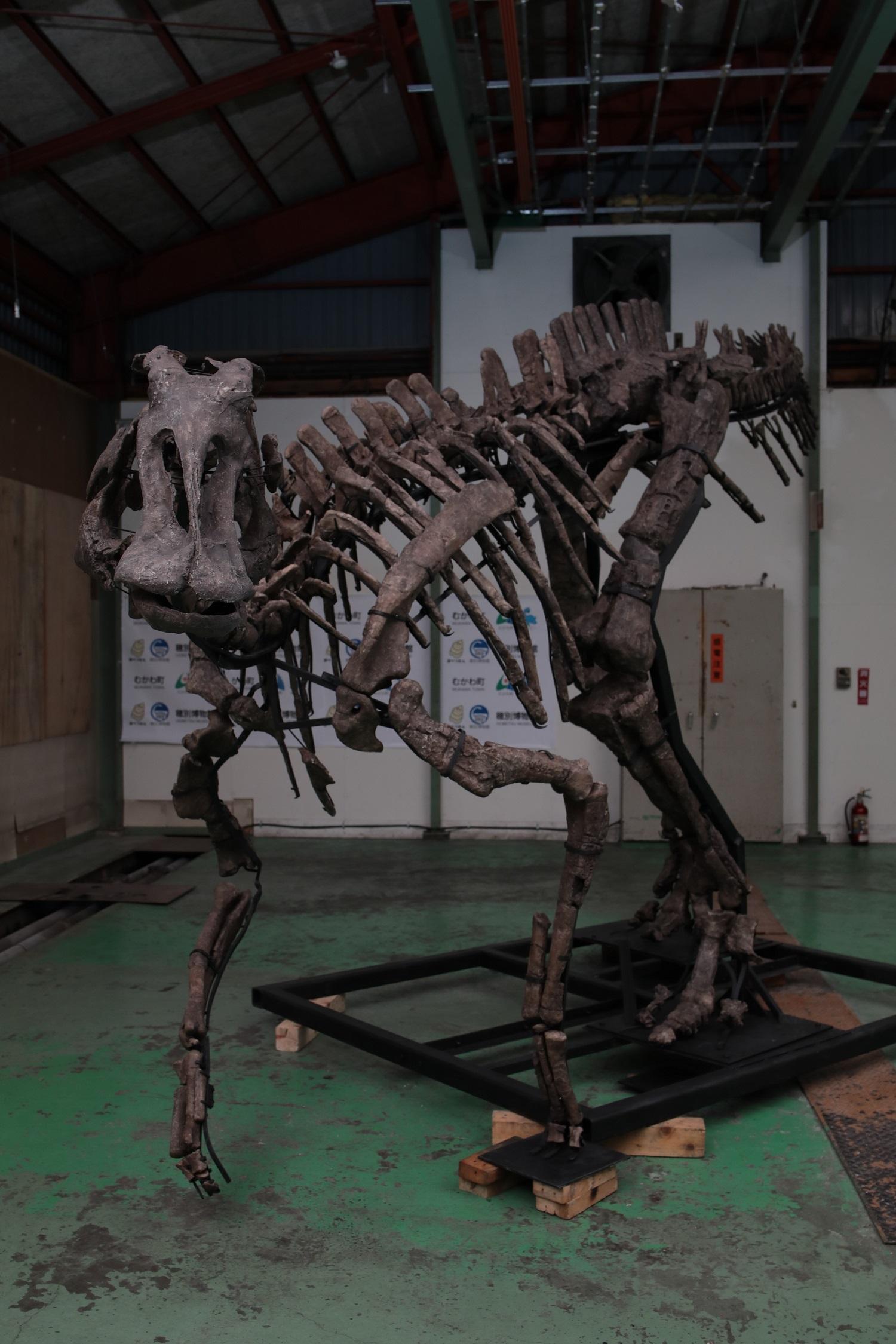 「むかわ竜」全身復元骨格 むかわ町穂別博物館所蔵