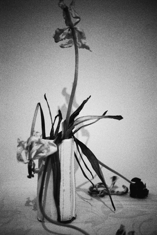 イケムラレイコ 《花》 2009/18 年 ラムダプリント 作家蔵