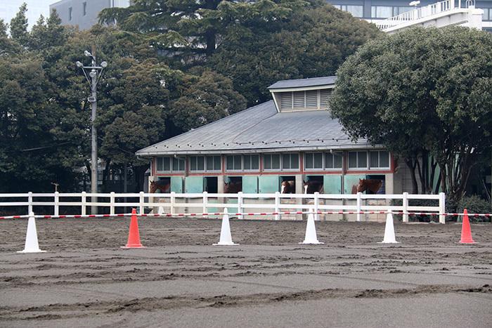 東京乗馬倶楽部の厩舎。ここから塚田さんが登場しました!