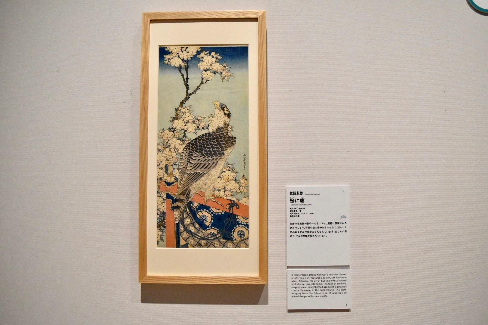葛飾北斎 《桜に鷹》 天保5年(1834)頃 すみだ北斎美術館所蔵