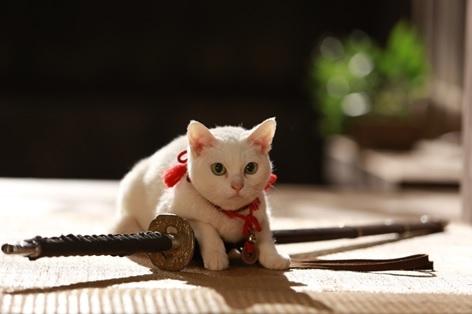 「猫侍」シリーズに出演中の玉之丞 (本名・あなご)