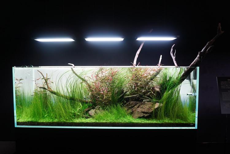 本間裕介《風薫る水辺》は、流木のダイナミックな曲線と、細く長い水草のコントラストが鮮やかだ。
