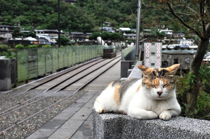 (上)猴硐(ほんとう)駅のすぐ横にある「瑞三礦業公司」の炭鉱の跡地。(下)猴硐名物の猫と炭鉱の線路跡。