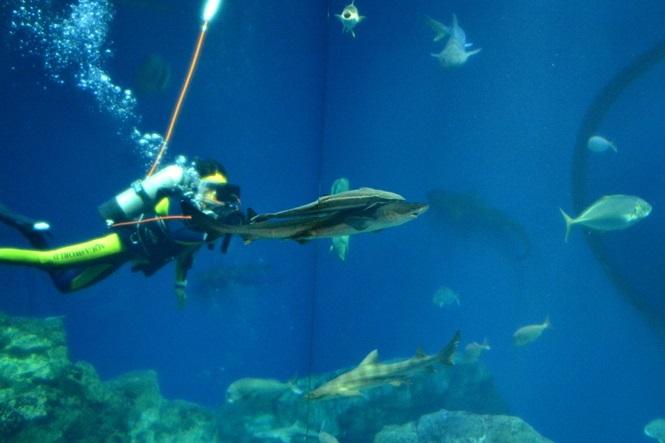 来館者がリクエストした魚をカメラで追ってくれます