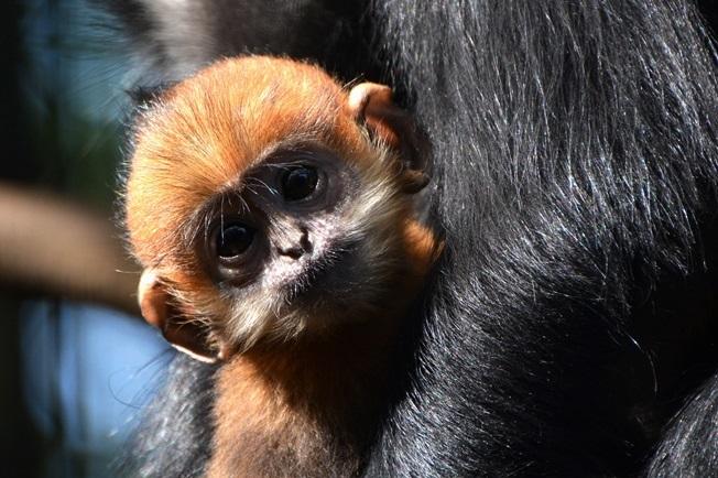 生後3ヶ月ぐらいの赤ちゃん(よこはま動物園ズーラシアにて2014年3月に撮影)