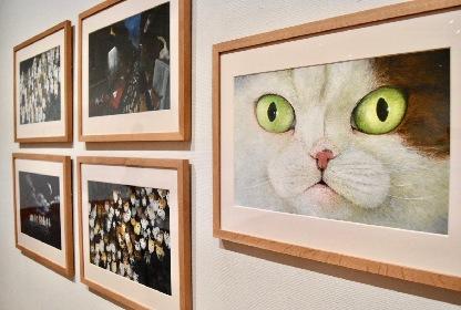 『ブラティスラヴァ世界絵本原画展 BIBで出会う絵本のいま』レポート 多様化する表現の魅力に迫る