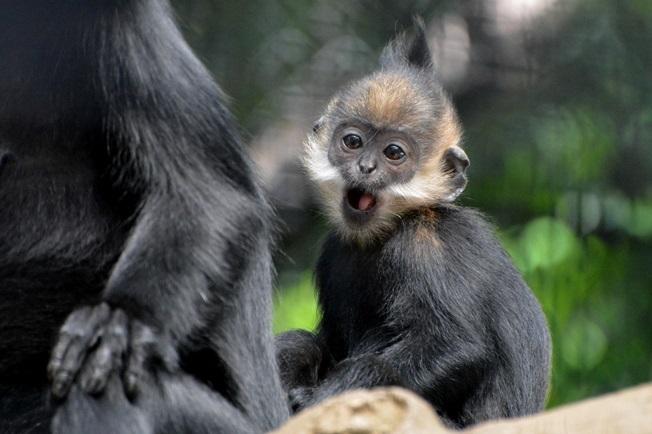 生後6か月ぐらいの赤ちゃん(よこはま動物園ズーラシアにて2014年6月に撮影)