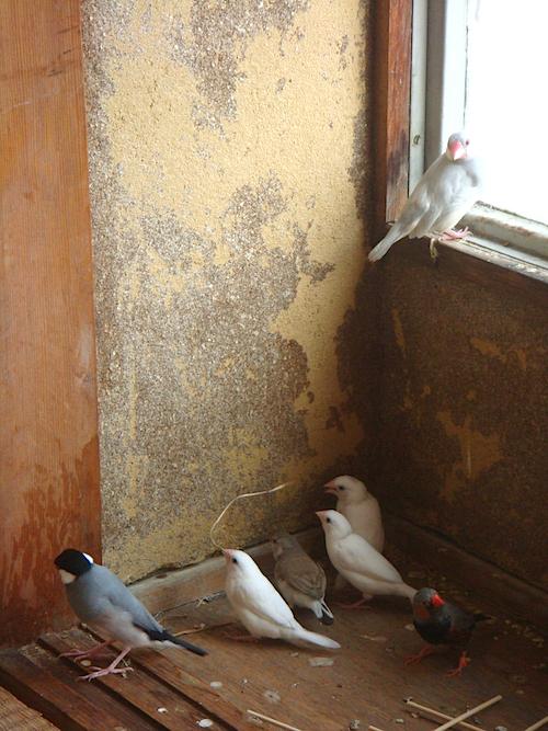 文鳥やジュウシマツなど多彩な愛らしい鳥たちと出会える