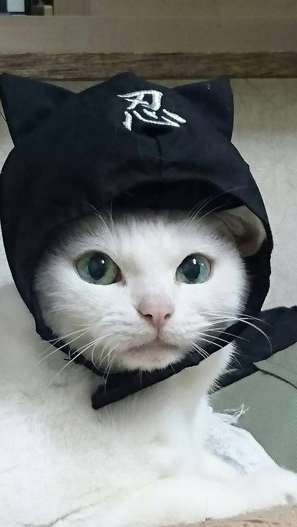 『猫忍』でのあなご(18歳)
