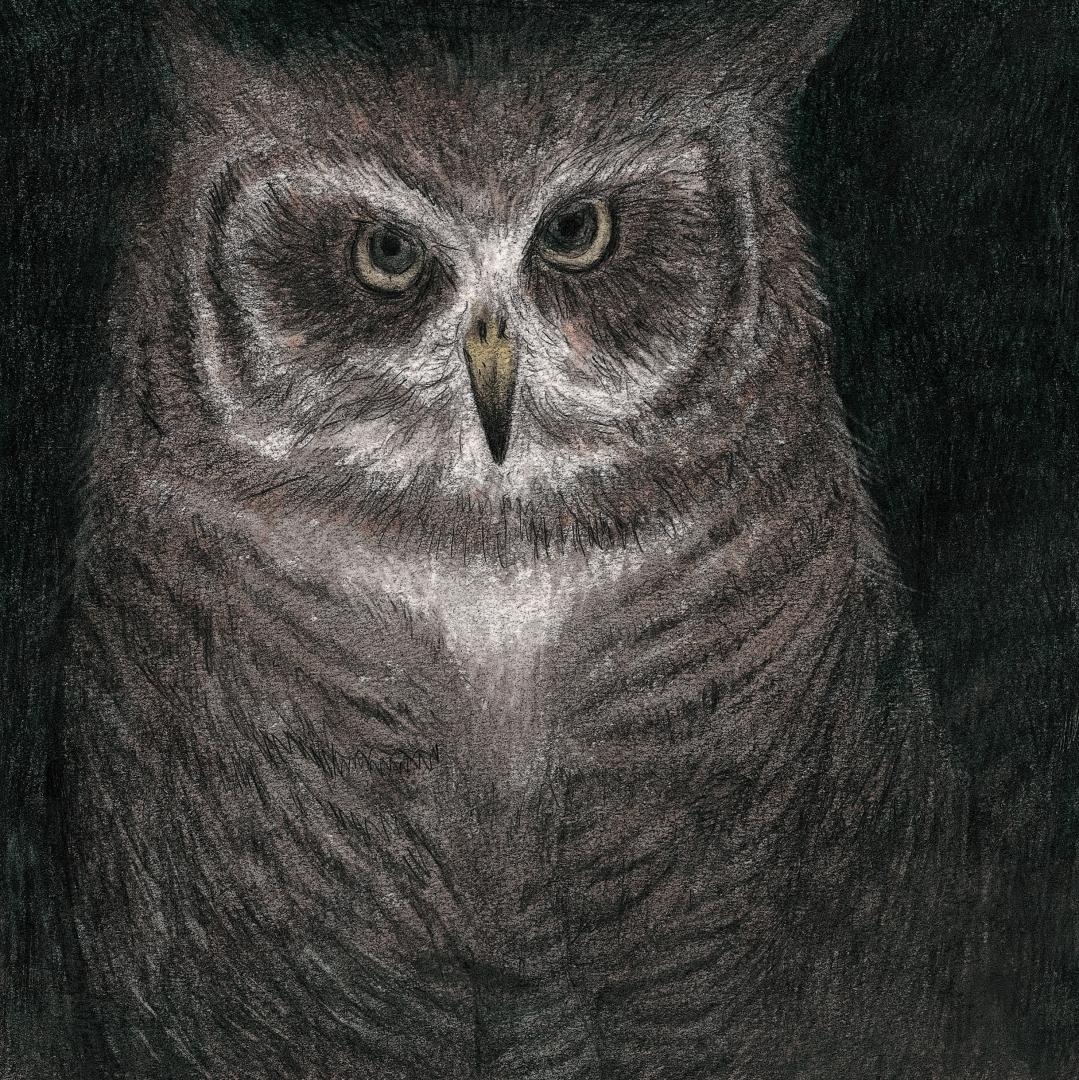 「フクロウの声が聞こえる」ジャケ写