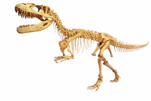 トルヴォサウルス全身骨格