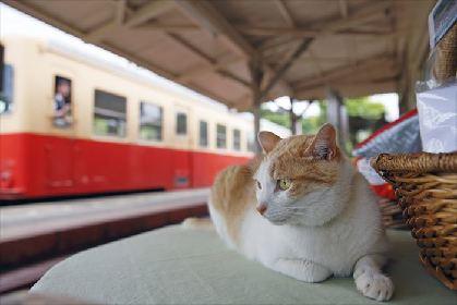「猫×鉄道」のテーマ展示も 『「鉄道」と「猫と鉄道」』写真展に200点