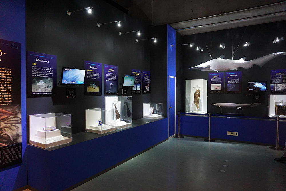 標本や実物模型、映像で見せる展示会場の様子