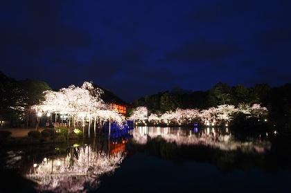 『平安神宮 紅しだれコンサート』今年も開催へ 佐藤和哉、あさい まり、Keiju、circuloが出演