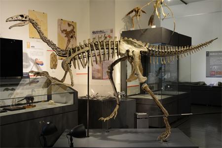 アラシャサウルスの全身骨格を展示