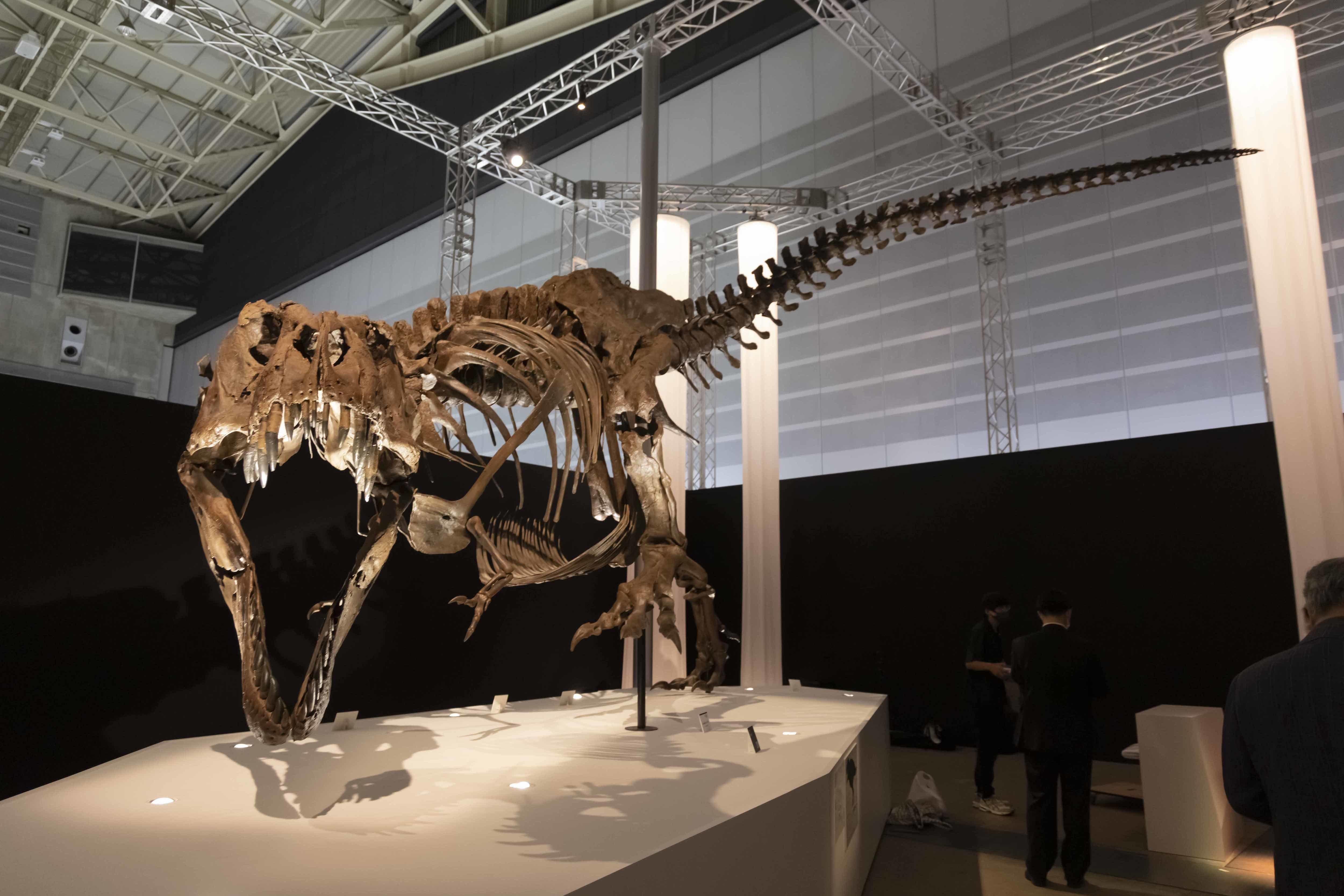 ティラノサウルス「スタン」 ※ヒューストン自然科学博物館所蔵