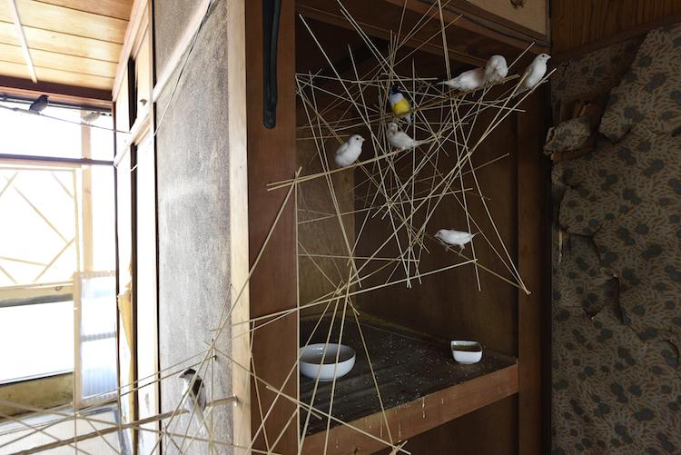 ビル1棟に小鳥を放ち、〈鳥のためのアート〉を制作したラウラ・リマの作品《フーガ》   photo:怡土鉄夫